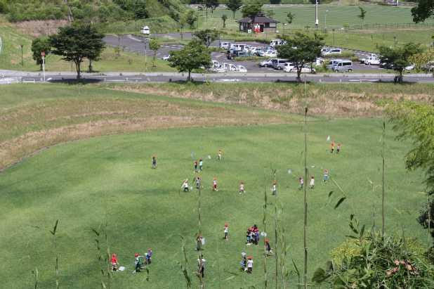 総合運動公園芝生