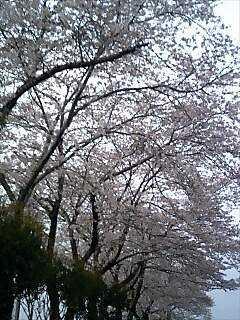 桜並木小林へ